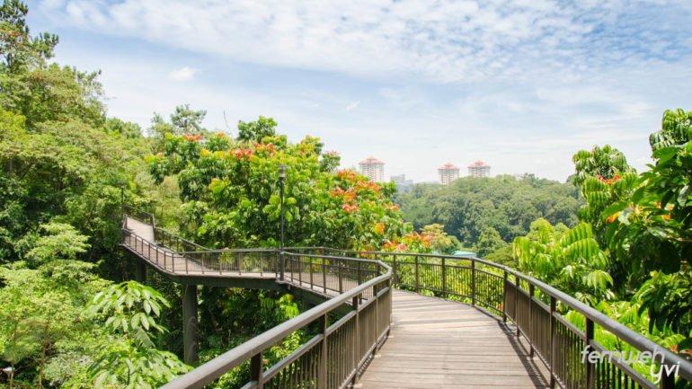 Der Canopy Walk