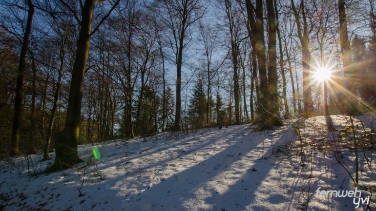 Die Sonne blitzt durch die Bäume